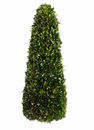"40"" Preserved Tea Leaf Cone Topiary"