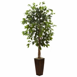 5.5' Ficus Tree in Bamboo Planter