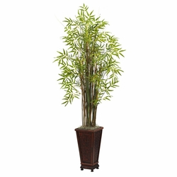 5.5� Grass Bamboo Plant w/Decorative Planter