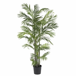 5' Areca Silk Palm Tree