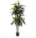 5� Dracaena Plant UV Resistant (Indoor/Outdoor)