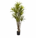 5� Dracaena Silk Tree