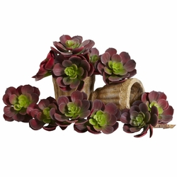 "5"" Echeveria Succulent Plant (Set of 12) in Burgundy"