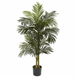 5� Golden Cane Palm Tree