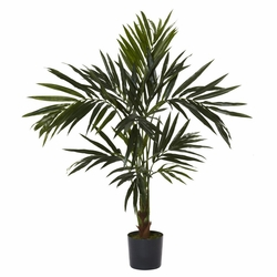 5' Kentia Silk Tree