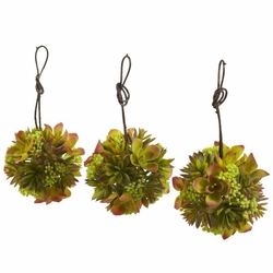 "5"" Mixed Succulent Hanging Ball (Set of 3)"
