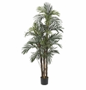 5' Robellini Palm Silk Tree