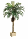 Set of 2 - 5' Silk Phoenix Palm Tree
