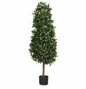 5' Sweet Bay Pyramid Silk Tree