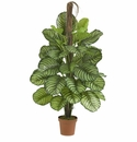 """52"""" Calathea Silk Plant (Real Touch)"""