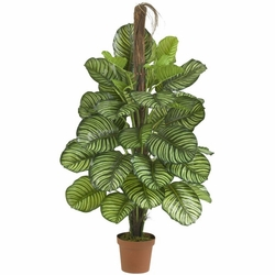 "52"" Calathea Silk Plant (Real Touch)"