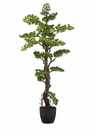 "53.9"" Artificial Boxwood Bonsai in Plastic Pot - Set of 2"