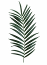 "56.5"" Artificial Silk Kentia Palm Frond Spray -Set of 48"