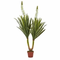 57� Flowering Yucca Plant