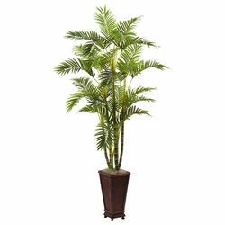 6.5� Areca w/Decorative Planter