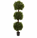 6.5� Sweet Bay Triple Ball Topiary