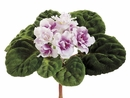 "6"" African Violet Silk Flower Bushes - Set of 6"