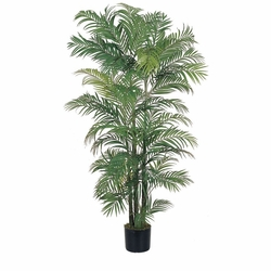 6' Areca Silk Palm Tree