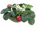 "6"" Artificial Strawberry Arrangement in Clay Bowl - Set of 4"