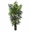 6� Bulb Areca Palm Tree