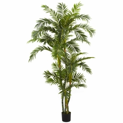 6� Curvy Parlor Palm Silk Tree