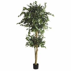 6' Double Ball Ficus Silk Tree