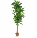 6� Dracaena Silk Plant (Real Touch)
