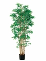 Set of 2 - 6' Japanese Bamboo Silk Trees