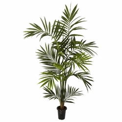 6' Kenitia Palm Silk Tree