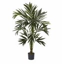 6' Kentia Silk Tree