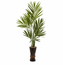 6� Kentia Tree w/Bamboo Planter