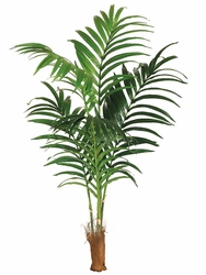 6' Silk Kentia Palm Tree Non Potted