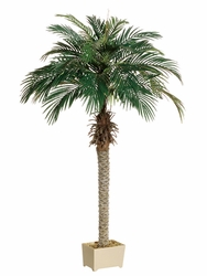 Set of 2 - 6' Silk Phoenix Palm Tree in Plastic Pot