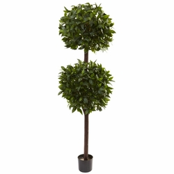 6' Sweet Bay Double Ball Topiary