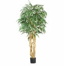 6' Weeping Ficus Silk Tree