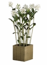 "69"" Artificial Cattleya Orchid Plant Arrangement in Basket"