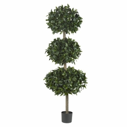 "69"" Sweet Bay Triple Ball Tree"