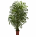 7.5' Areca Palm W/1966 Lvs UV Resistant (Indoor/Outdoor)