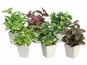 "7.5"" Artificial Assorted Greenery Arrangement in Ceramic Pot - Set of 12"