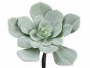 "7.5"" Artificial Echeveria Cactus Pick - Shown in Green"