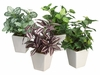 "7.5"" Assorted Silk Greenery Arrangements in Ceramic Pots (4 in set)"
