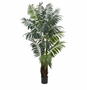 7.5� Bulb Areca Palm Tree