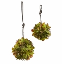 7� & 5� Mixed Succulent Spheres (Set of 2)