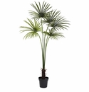 7� Fan Palm Tree UV Resistant (Indoor/Outdoor)