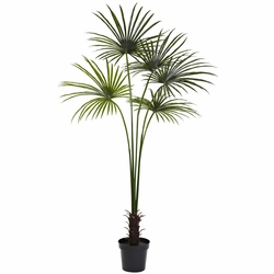 7' Fan Palm Tree UV Resistant (Indoor/Outdoor)