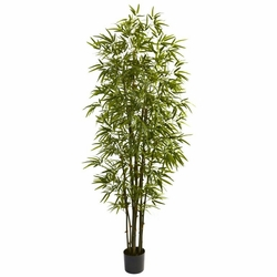 7� Green Bamboo Tree