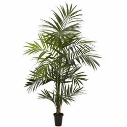 7' Kentia Palm Silk Tree