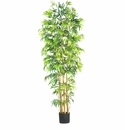 7' Multi Bambusa Bamboo Silk Tree