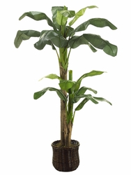 7' SILK BANANA TREE X 2 WILLOW PLANTER