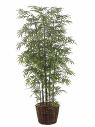 8.5' BLACK BAMBOO SILK TREE IN WILLOW PLANTER